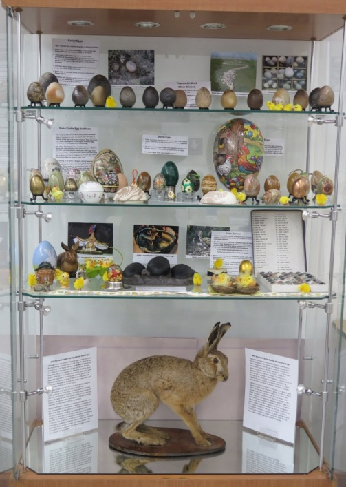 The true Easter bunny. See our display at the Green Centre this Easter. You can also see the display of eggs, including dinosaur eggs  and you can help record brown hare and rabbit in the county.